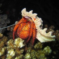 Lexi's photo from her night dive! #PADI20Millionth