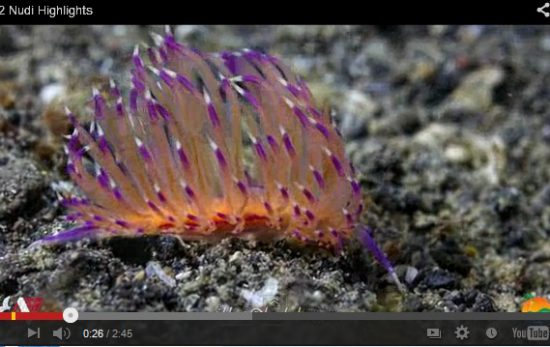 PADI Video of the Week: Nudibranchs