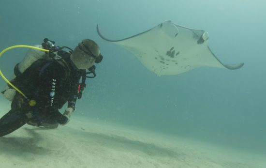 Diving with Mantas in the Maldives