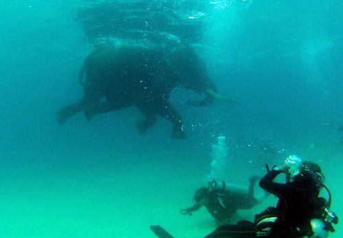 World Record Scuba Diving with Elephant