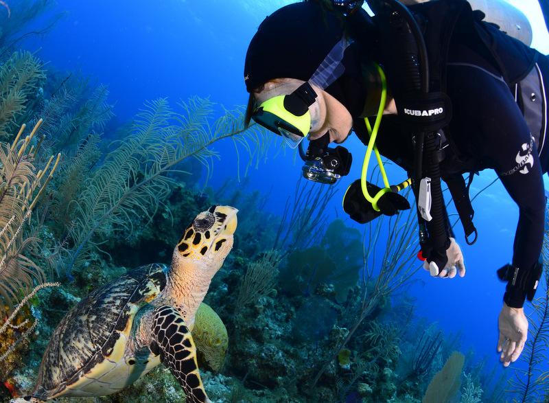 Turtle and Diver - Photo by Mark Long