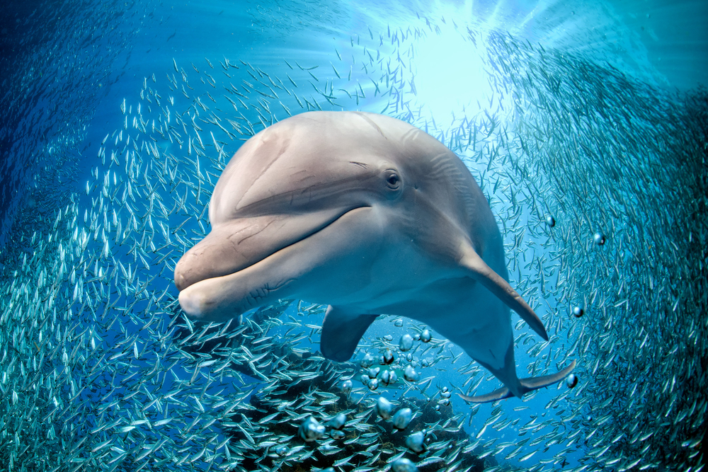10 Fascinating Dolphin Facts