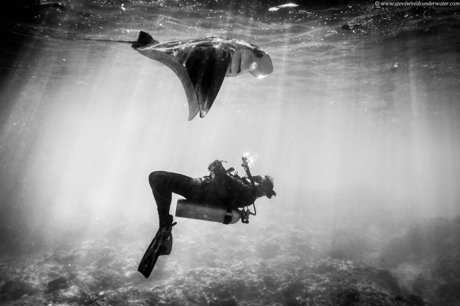 Great black and white shot from steve woods underwater photographys
