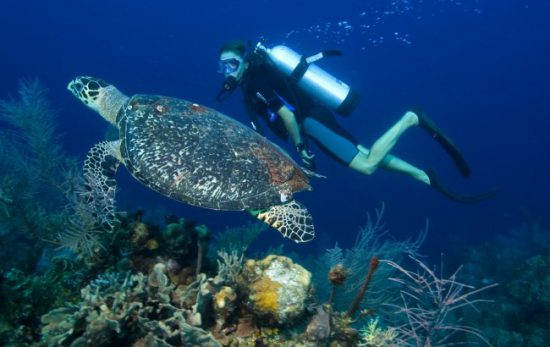 Best places to scuba dive with turtles