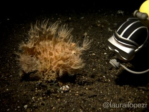 Plastic Diver and Hairy Frogfish