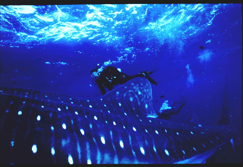 Jeff Nadler whale shark