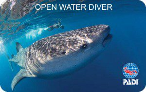 Whale shark and snorkeler © Stephen Frink