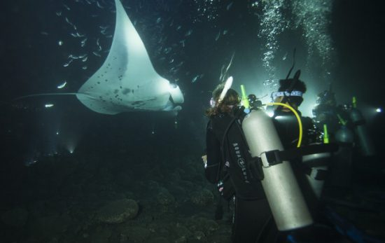 emily-hawaii-rays-night-dive