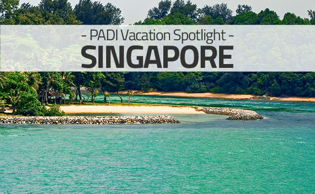 Diving in Singapore - Vacation Spotlight