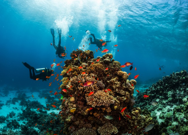 divers-coral-red-sea