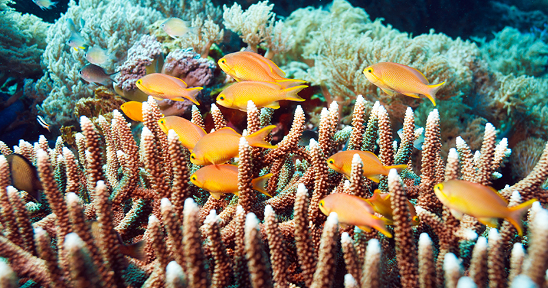 Liveaboard diving Indonesia - Fish and Coral