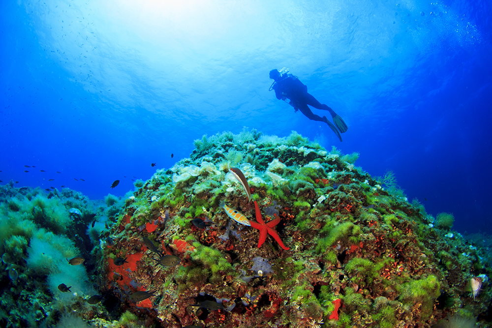 scuba-diving-ibiza-balearic-islands