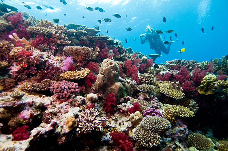 Fiji Divers - Scuba Diving - Ocean - Coral Walls