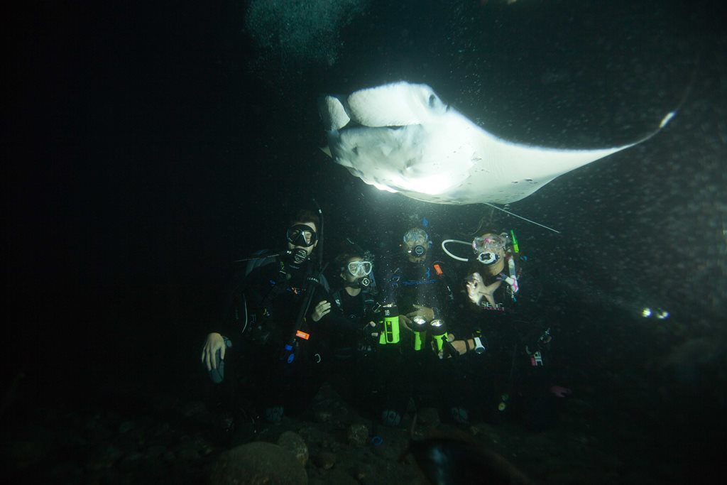 Manta rays during Kona night dive