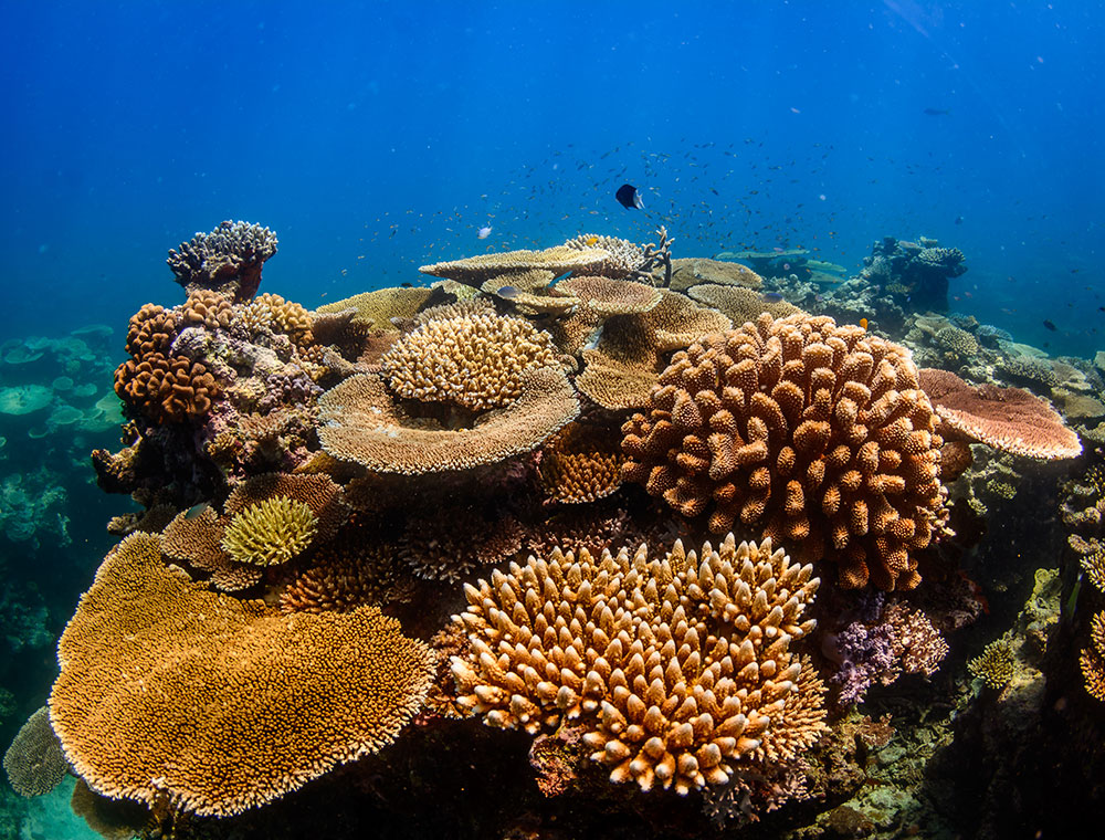 Achim Wetz Photography - Great Barrier Reef