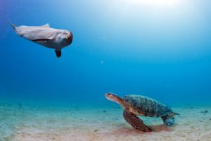 dolphin-sea-turtle-save-ocean