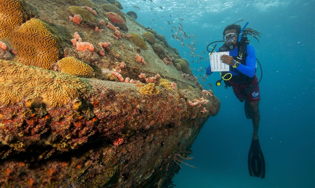 Coral Reef Survey
