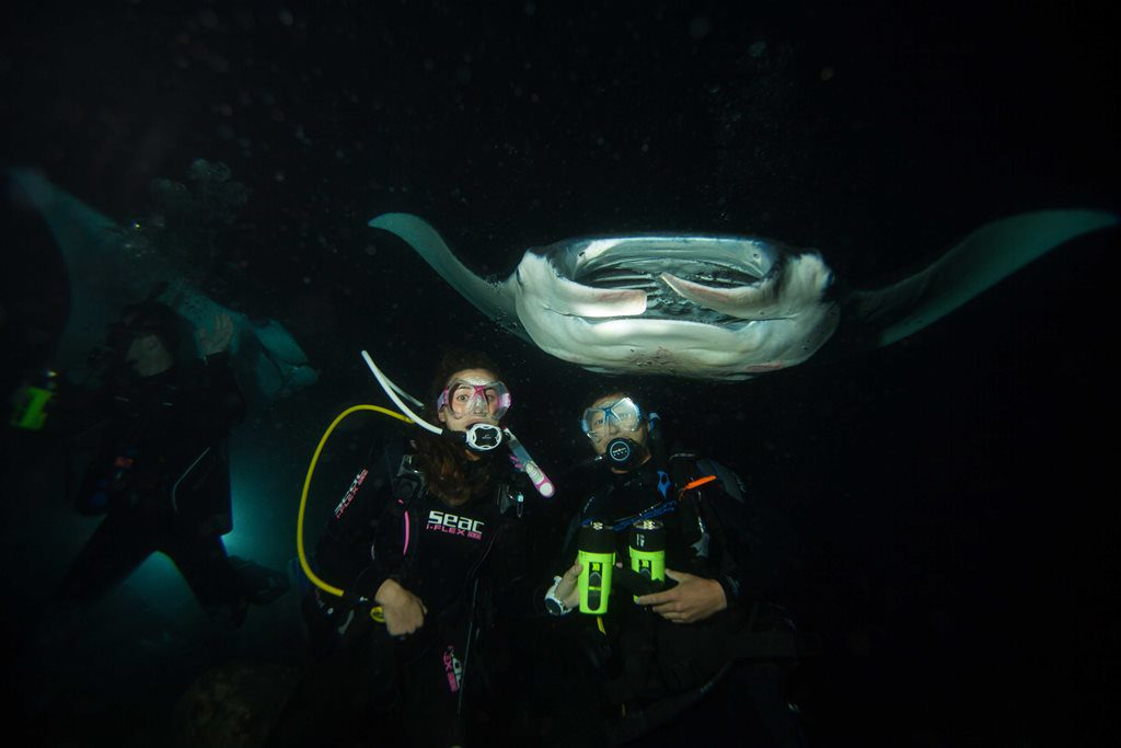 Night Diving - Manta Rays