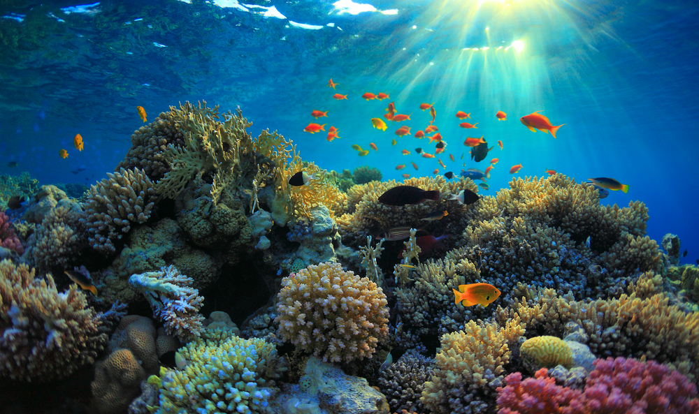 ocean-coral-reef-healing-power-water
