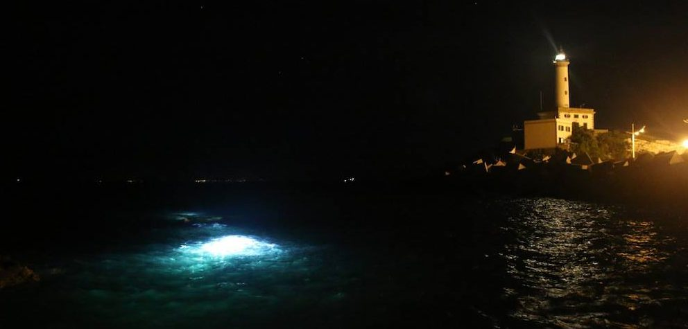 ibiza-night-dive
