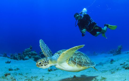 Diving with sea turtle. New Year resolution