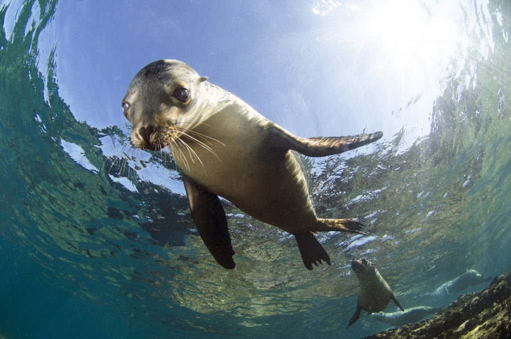 Sea Lions in Los Islotes in La Paz, Mexico shot by Luke Inman