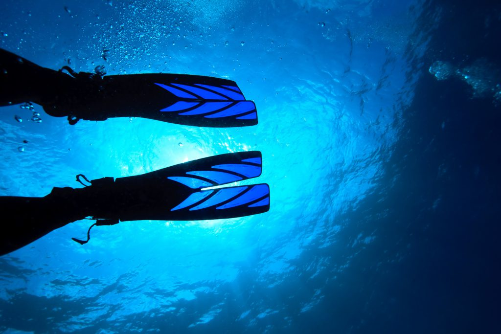 scuba diving fins from shutterstock