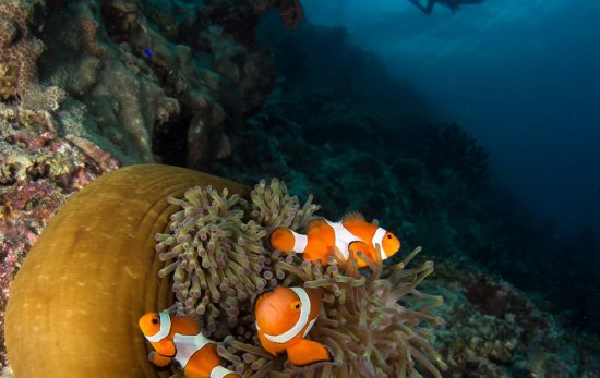 Diving the Coral Triangle Photo: Henley Spiers