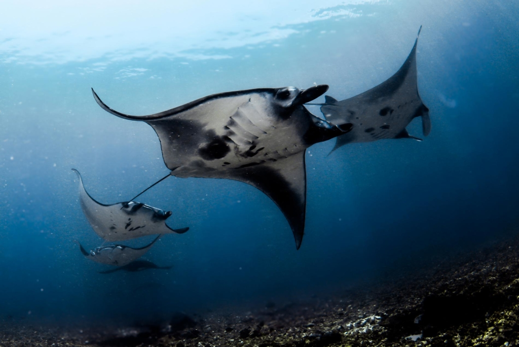 Manta Rays, Komodo National Park: My top five dives to date