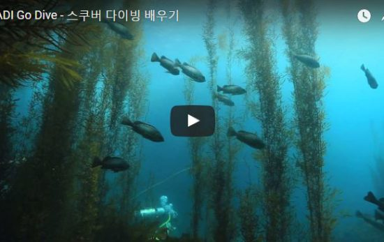 Korean PADI Go Dive Video
