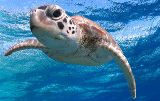 best places to dive with sea turtles