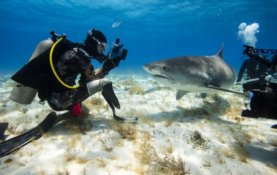 Mike Coots in the Bahamas diving with tiger sharks