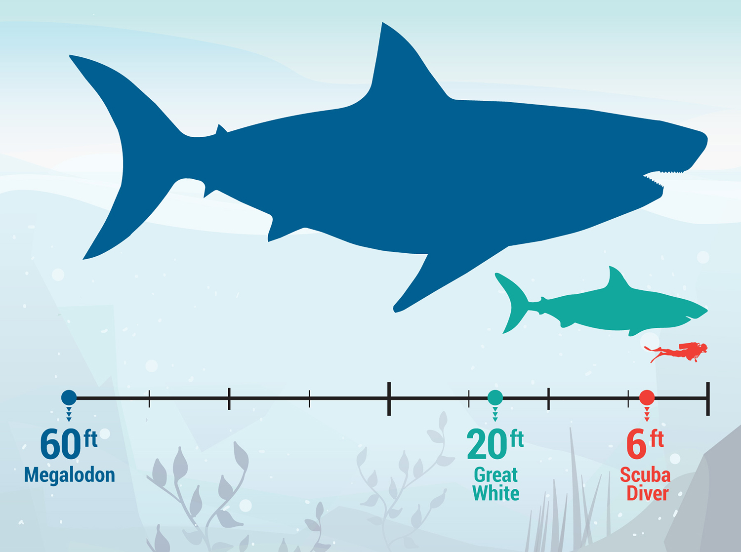 Megalodon Shark Facts – The Largest Known Ocean Predator