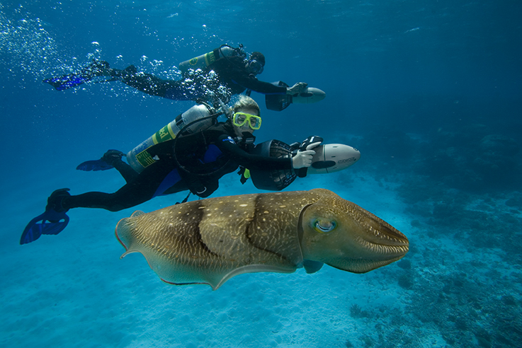 PADI Master Scuba Diver and cuttlefish