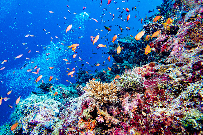 Ultimate Dive Sites in the Maldives Reef