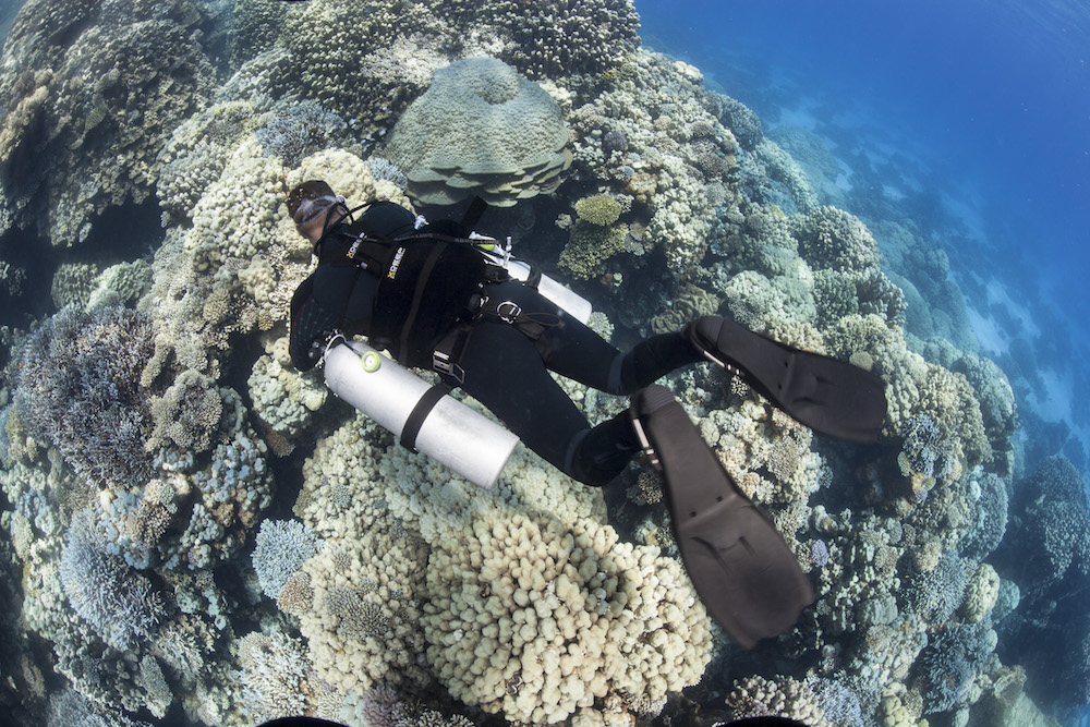 Learn more about the PADI Sidemount Diver course.