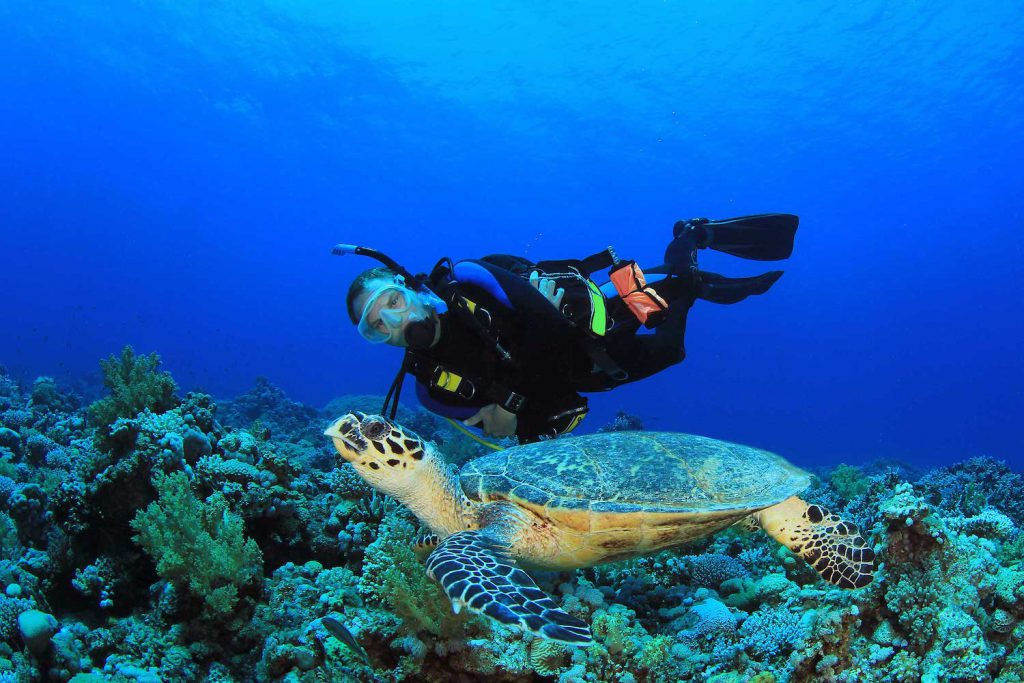 scuba diving this holiday