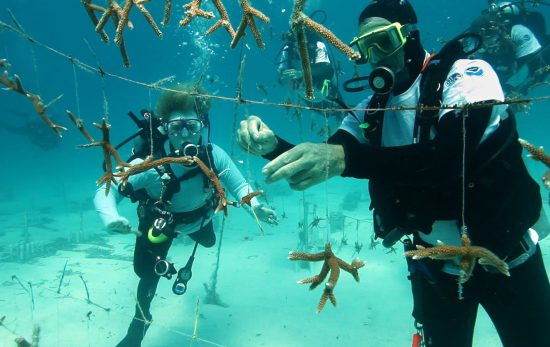 Restoration organizations operate coral nurseries with FKNMS permits. Photo: NOAA