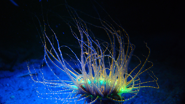 Expand your diving to Fluorescence diving