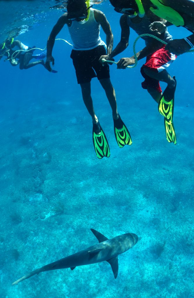 Students from Bimini freediving with Caribbean reef sharks. Photo: Jillian Morris