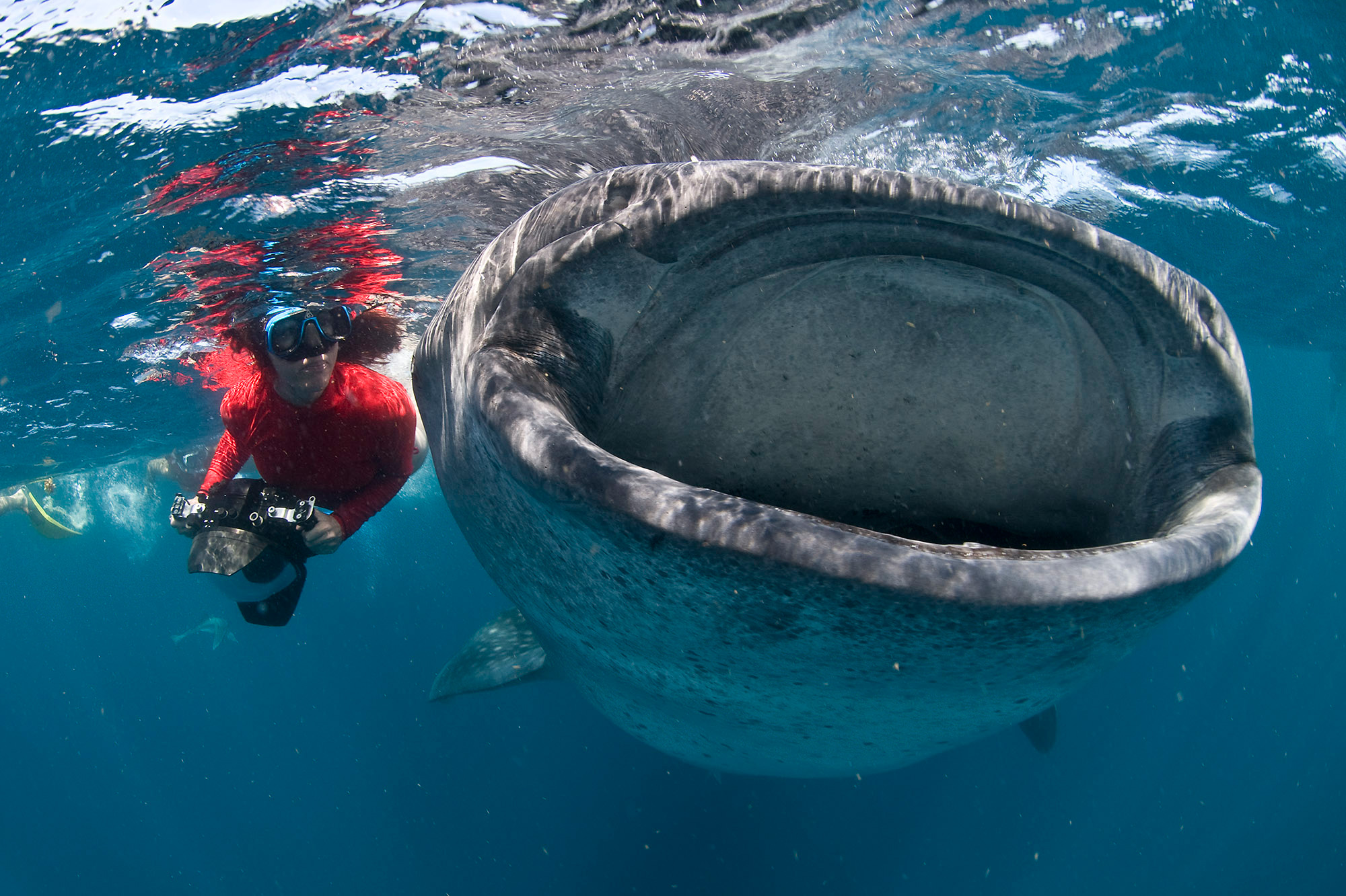 Lesley Rochat, the shark warrior photographing a whale shark