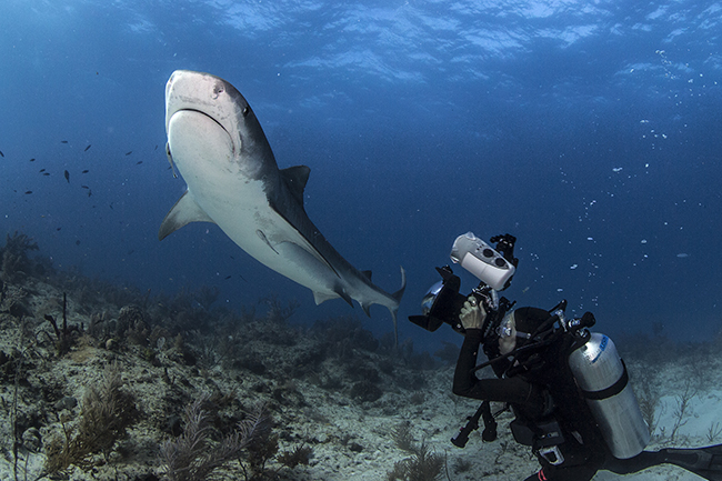 Underwater photography with the shark warrior!