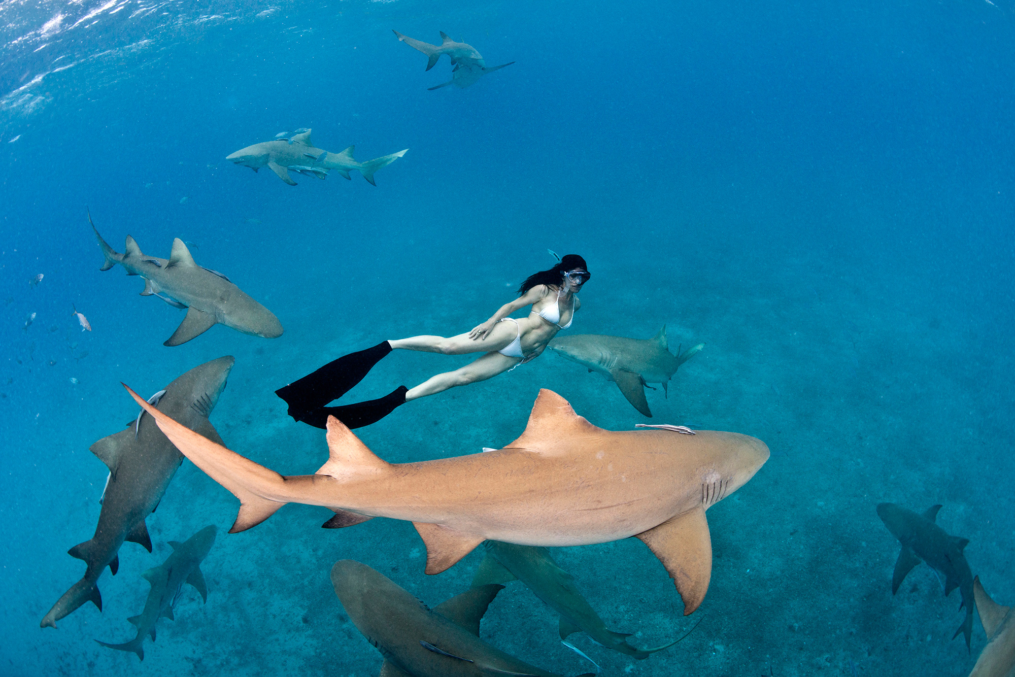 Lesley with Lemon sharks