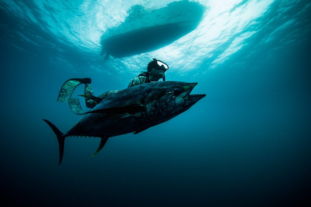 Kimi Werner professional freediver. Photo Perrin James