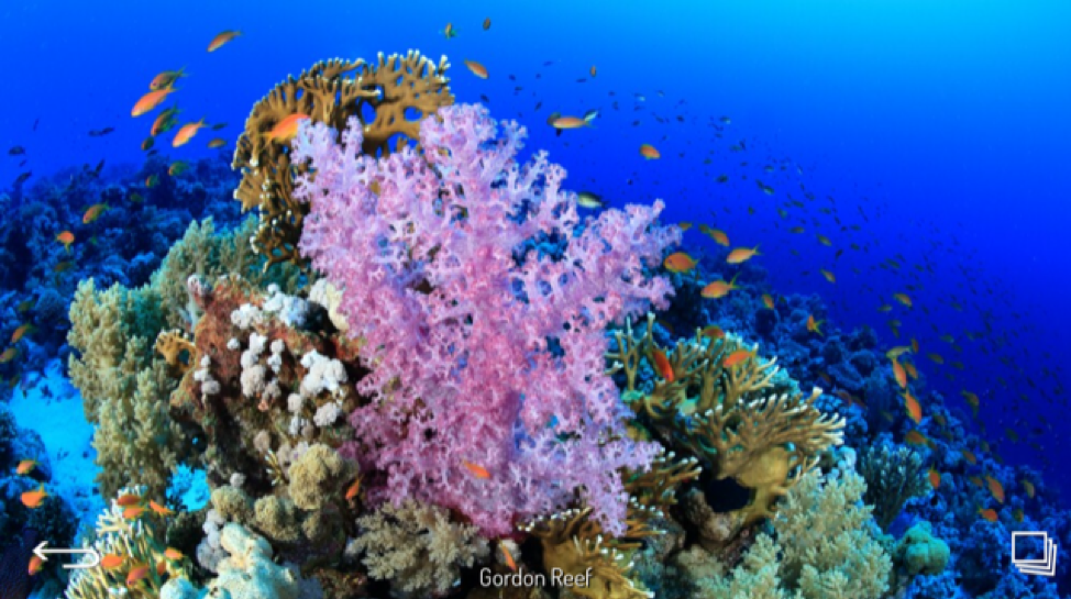 Gordon Reef- Red Sea