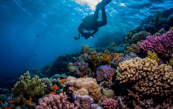 Red Sea Diving - reef