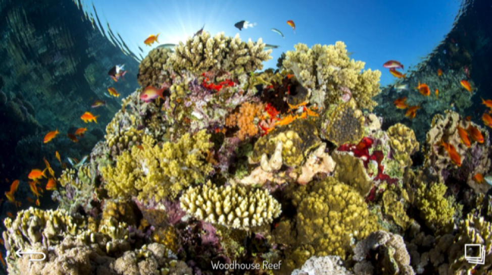Woodhouse Reef - Red Sea