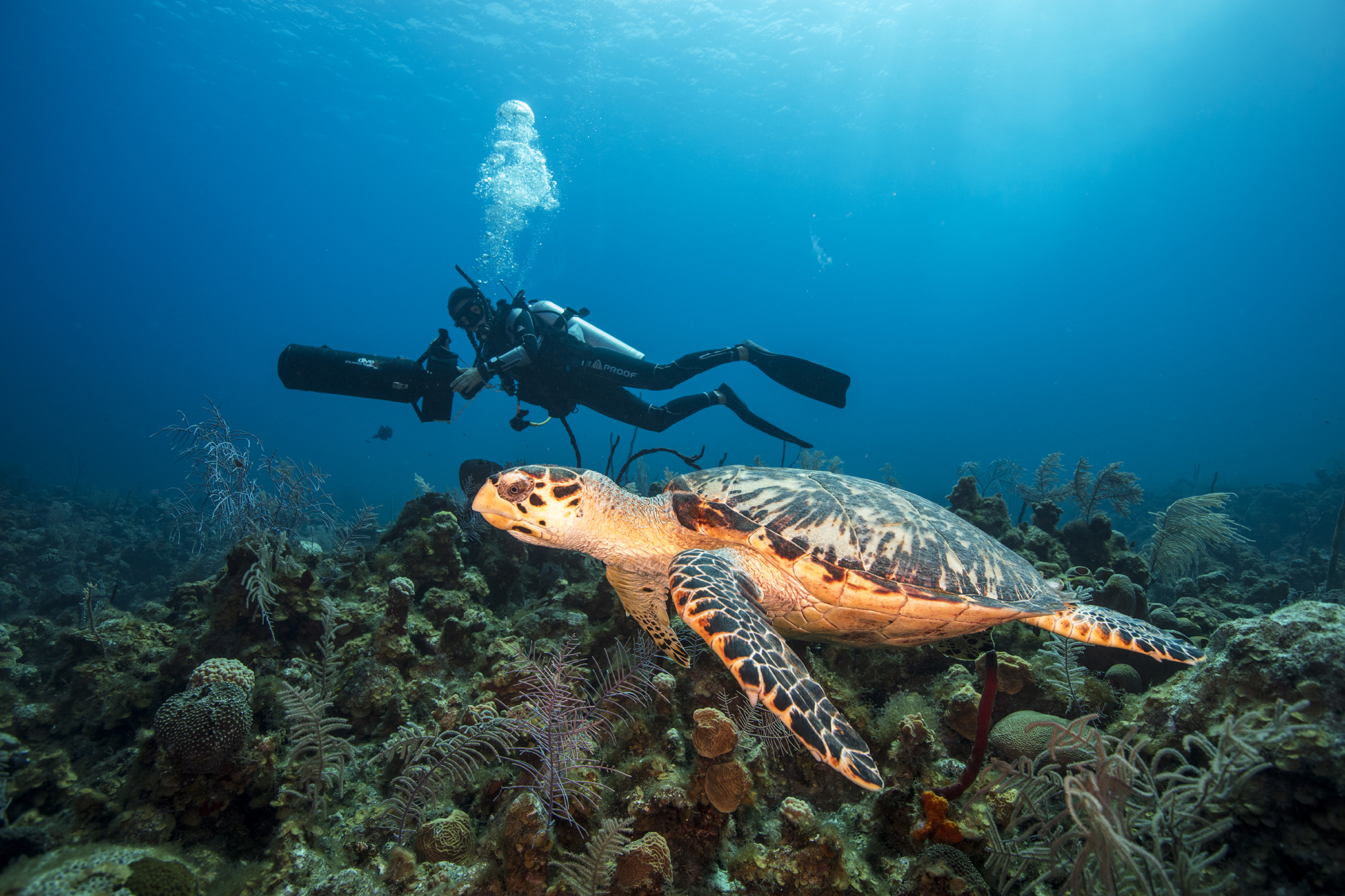 Respectfully diving with turtles