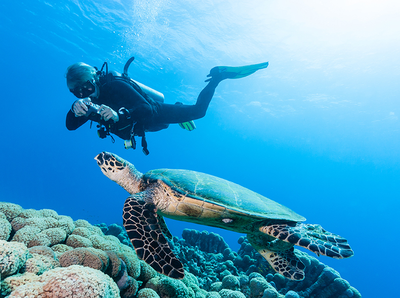 Taking photos when diving with turtles