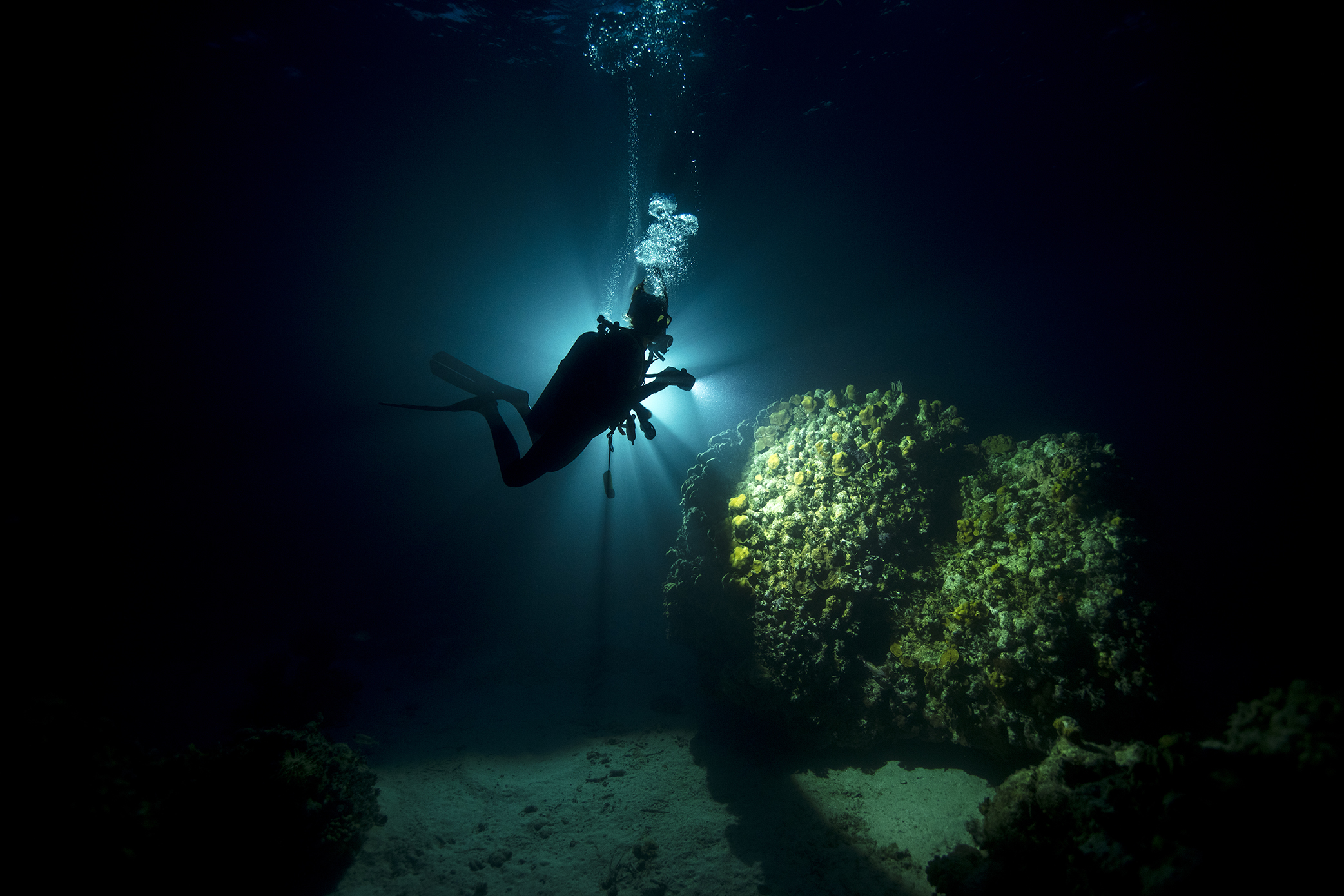 PADI Digital Underwater Photographer Specialty course
